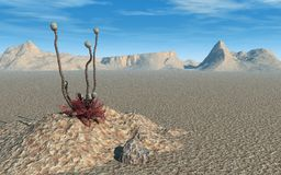 Alien Desert. With a very strange plant growing out of pile of dirt. Squiggly stems with large odd seedpods on an alien plant species. Desert is barren. Deep Royalty Free Stock Photography