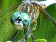 Alien Eyes. Alien like green dragonfly eyes Stock Photography
