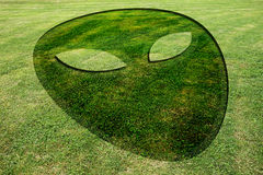 Alien face fake crop circle meadow. Alien face fake crop circle in the meadow Stock Image