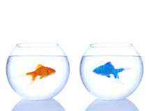 Alien goldfish and normal goldfish Stock Photography