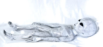 Alien Grey laying on bed Royalty Free Stock Image