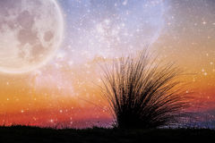 Alien landscape of beach grass flexing in the wind at sunset wit. H galaxy stars and huge planet in the sky. Elements of this image are furnished by NASA stock image