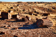 Alien Landscape. Of the petrified forest Arizona stock images