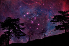 Alien landscape. Alien planet with tree silhouette again sky with many stars - elements of this image are furnished by NASA Stock Images