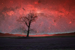 Alien landscape. Red alien landscape with alone tree silhouette in purple field- elements of this image are furnished by NASA royalty free stock photography