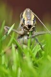 Alien look. Closeup shot of grasshopper looking like alien Stock Photo