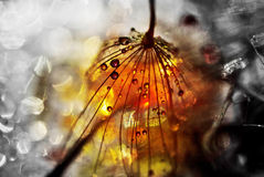 On an alien planet. Dandelion seed sprinkled with colors Stock Images