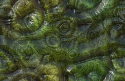 Alien Skin. Seamless Alien Skin Texture of Reptile Monster Stock Image