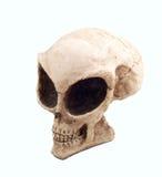 Alien skull. Isolate alien skull with big orbit Royalty Free Stock Images