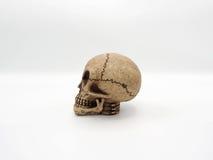 Alien skull. Royalty Free Stock Images