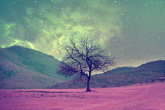 Alien tree landscape. Red alien landscape with alone tree silhouette in purple field- elements of this image are furnished by NASA stock images