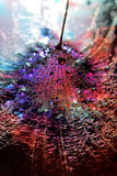 Alien world. Dandelion sprinkled with colorful water Royalty Free Stock Photography