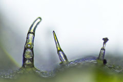 Alien world. Microscopic green leaf plant edge stock photography