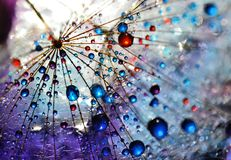 Alien worlds. Dandelion seed sprinkled with colors Royalty Free Stock Image