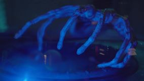 Aliens claw in under dome. Close-up shot of a scary alien claw shaking under glass dome lit with blue light. Interesting UFO museum stock video footage