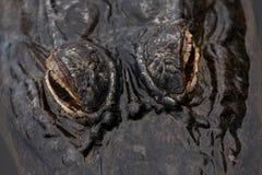 aligatorów oczy Obraz Royalty Free