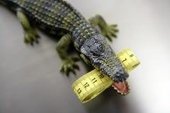 Aligator de jouet, mesure de bande de centimètre Images stock
