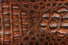 Aligator deseniujący tło Obrazy Royalty Free