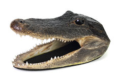 Aligator głowa Obrazy Royalty Free