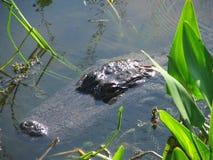 aligator kobieta Obrazy Stock