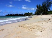 Aligator na praia do paia Imagem de Stock