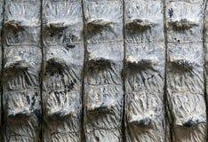aligatora krokodyla skóry tekstura Fotografia Royalty Free