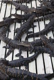 aligators Florida Zdjęcia Stock