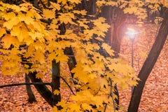 Alight lantern in a park. Alight lantern in an autumn park Stock Image