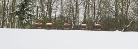 Aligned Beekeeping. Under the snow stock images