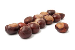 Aligned horse chestnuts Royalty Free Stock Photos