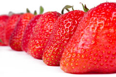 Aligned  strawberries Stock Photos