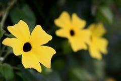 Alignement jaune de fleurs Photographie stock libre de droits