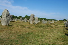 Alignment of menhirs. In fieds in carnac in france Stock Photography