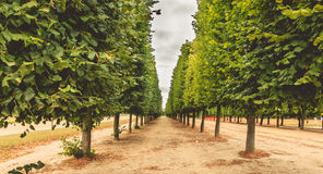 Alignment of trees in a French garden. Near Paris, France stock images