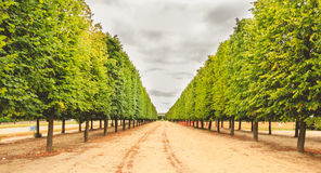 Alignment of trees in a French garden. Near Paris, France royalty free stock images