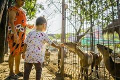 Alimentándolos enseña un niño a amar el animal Foto de archivo