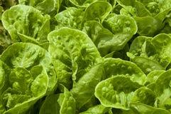 Aliment biologique Image libre de droits