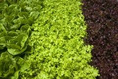 Aliment biologique images libres de droits