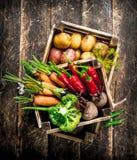 Aliment biologique Récolte des légumes frais dans de vieilles boîtes photo stock