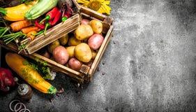 Aliment biologique Récolte fraîche des légumes dans une vieille boîte photographie stock libre de droits