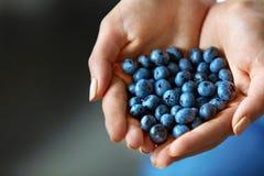 Aliment biologique sain La femme remet complètement des myrtilles mûres fraîches image stock