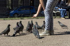 Alimentação da menina dos pombos, pássaros Fotos de Stock Royalty Free
