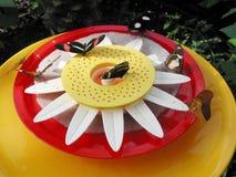 Alimentação das borboletas Fotografia de Stock
