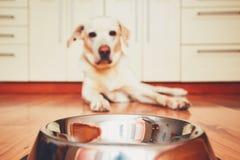 Alimentação de espera do cão com fome fotografia de stock royalty free