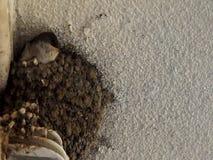 Alimentação de espera do pintainho no ninho da argila vídeos de arquivo