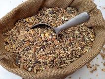 Alimentação de galinha Imagem de Stock Royalty Free
