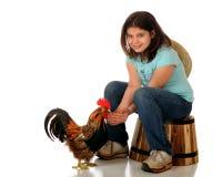 Alimentação de galinha Fotos de Stock Royalty Free