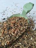 Alimentação de galinha com caranguejos Imagens de Stock