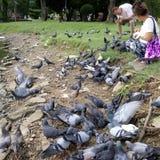 Alimentação do pássaro Imagem de Stock Royalty Free