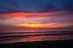 Alimentação dos Shorebirds na praia no por do sol fotos de stock royalty free